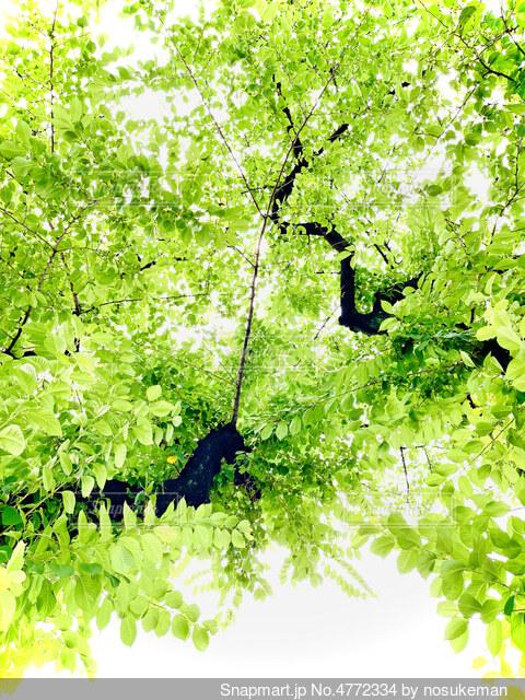 植物のクローズアップの写真・画像素材[4772334]