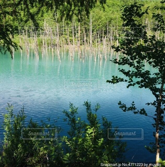 青い水面の写真・画像素材[4771223]