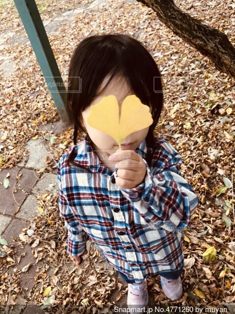 イチョウの葉っぱの写真・画像素材[4771260]