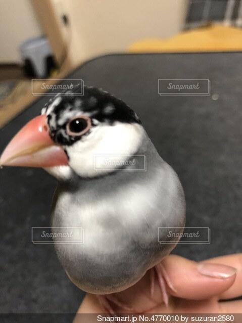 鳥を抱いている人の写真・画像素材[4770010]