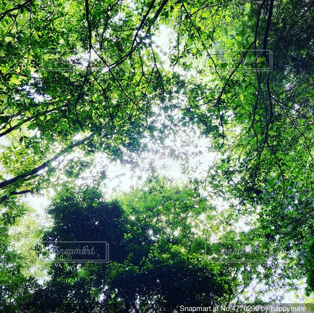 森から見上げた空の写真・画像素材[4770299]