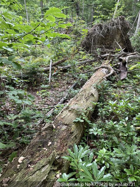 倒木の写真・画像素材[4770426]