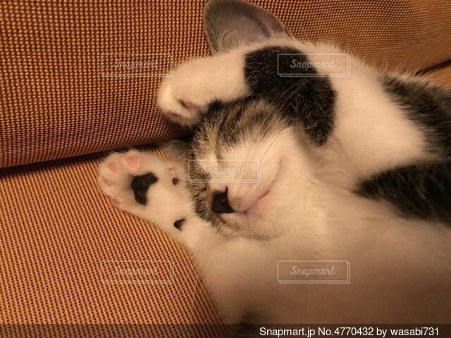まだ眠るの写真・画像素材[4770432]