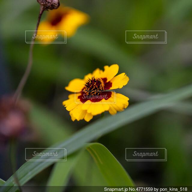 小さな黄色の花の写真・画像素材[4771559]