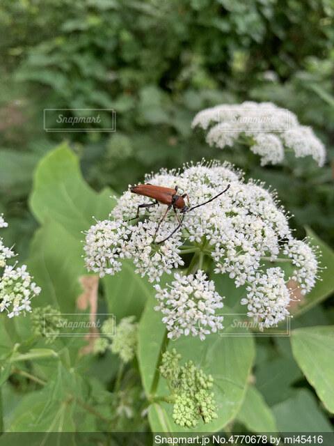 虫さんの写真・画像素材[4770678]