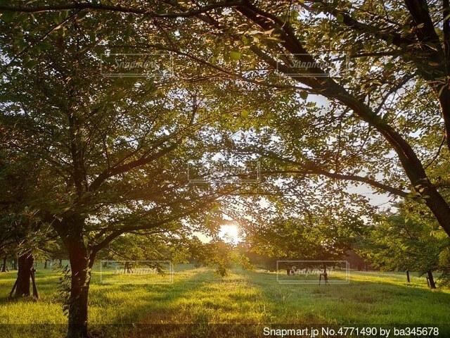 草原の朝日の写真・画像素材[4771490]