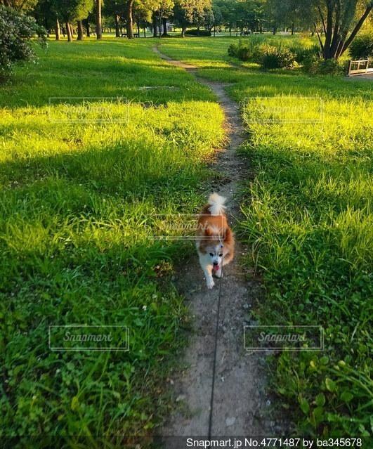 草原の小道を行く小犬の写真・画像素材[4771487]