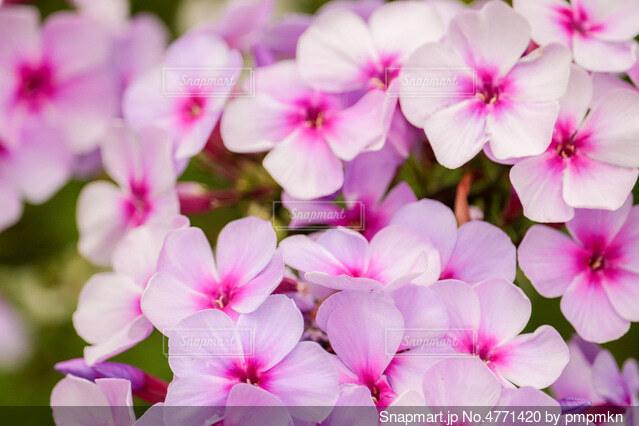 花ですの写真・画像素材[4771420]