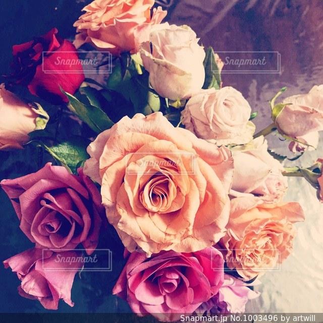 薔薇の花束の写真・画像素材[1003496]