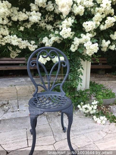 花の庭の写真・画像素材[1003644]