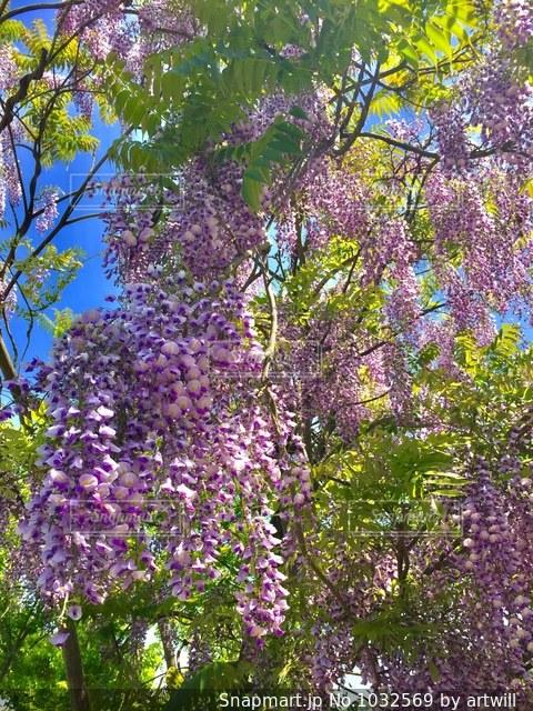紫色の花の写真・画像素材[1032569]
