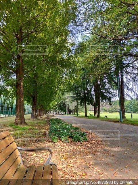 木の隣にある空の公園のベンチの写真・画像素材[4872933]