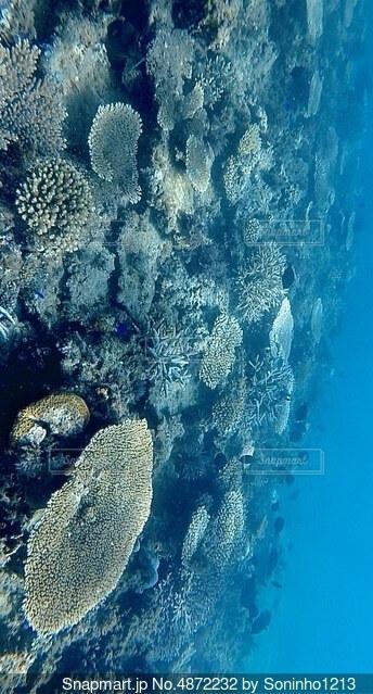 海中の珊瑚の写真・画像素材[4872232]