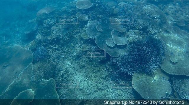 海の中の写真・画像素材[4872243]