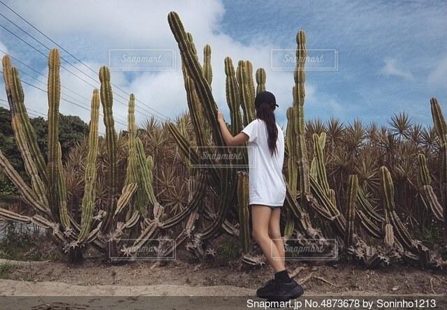 サボテン畑を散歩する人の写真・画像素材[4873678]
