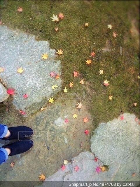 紅葉🍁の写真・画像素材[4874768]