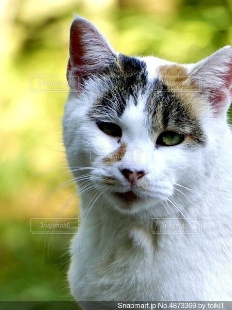 問いかける猫の写真・画像素材[4873369]