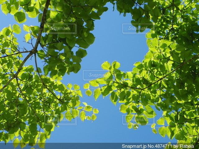 青空と緑の葉の写真・画像素材[4874711]