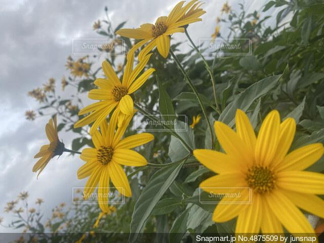 秋の空と花の写真・画像素材[4875509]