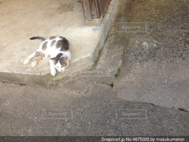 地面に横たわっている犬の写真・画像素材[4875020]