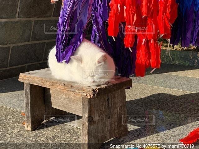 猫の写真・画像素材[4875575]