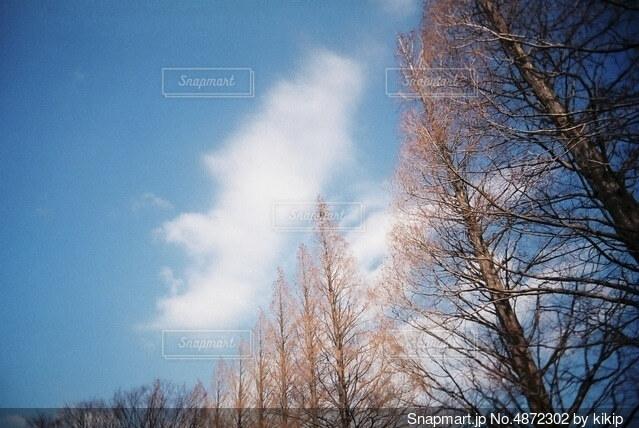 木のクローズアップの写真・画像素材[4872302]