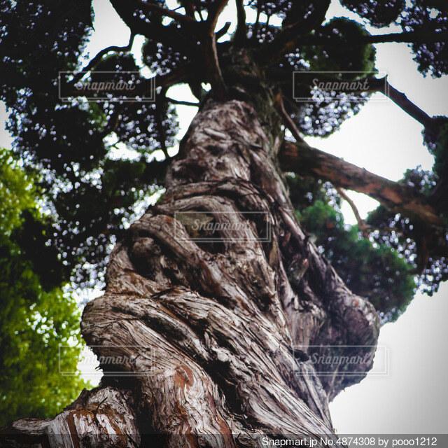 大きな木の写真・画像素材[4874308]