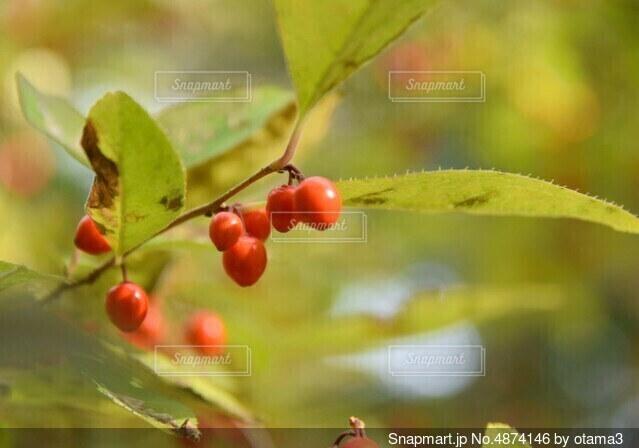 秋と実の写真・画像素材[4874146]