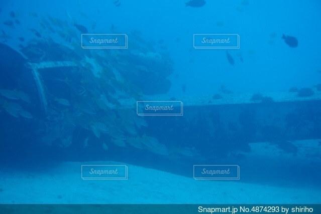 ハワイの水中の写真・画像素材[4874293]