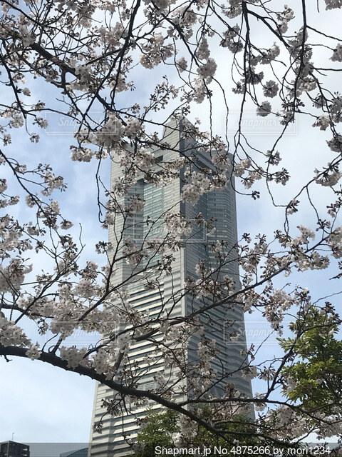 桜のモザイクの写真・画像素材[4875266]