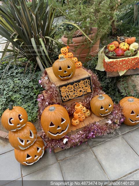 かぼちゃどれがいい?の写真・画像素材[4873474]