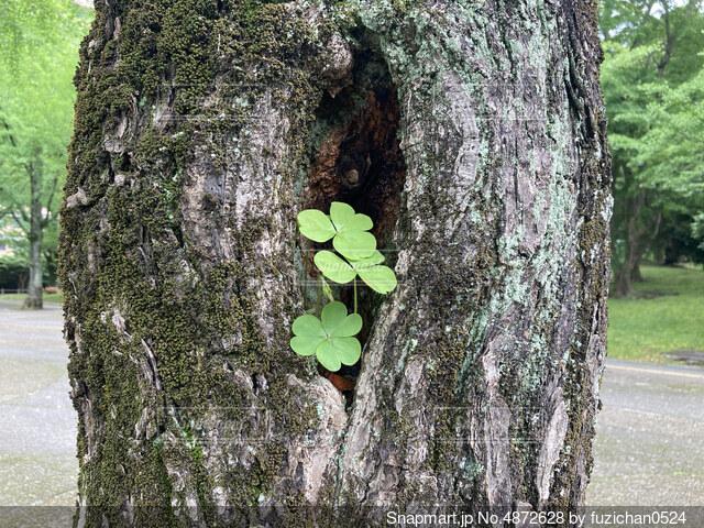 木の幹から葉の写真・画像素材[4872628]