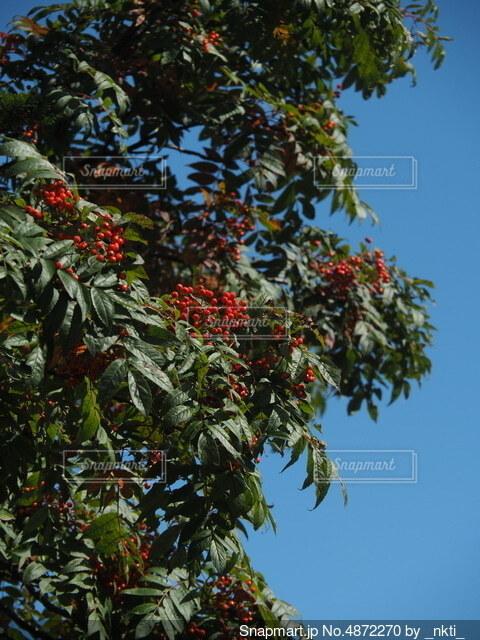 果樹の近くの写真・画像素材[4872270]