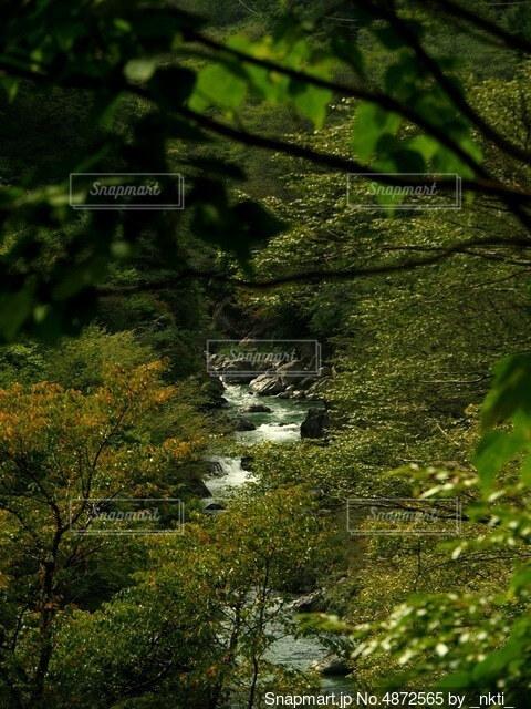 森の中の緑の植物の写真・画像素材[4872565]