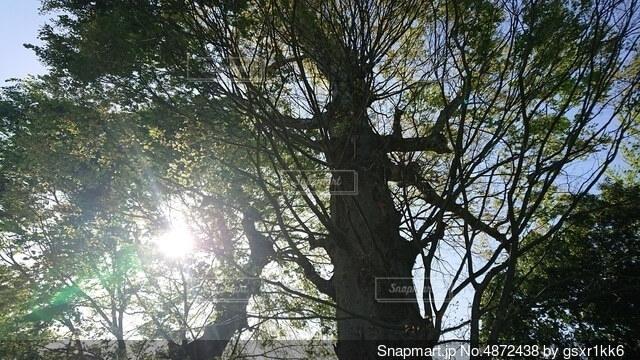 大きな木の写真・画像素材[4872438]