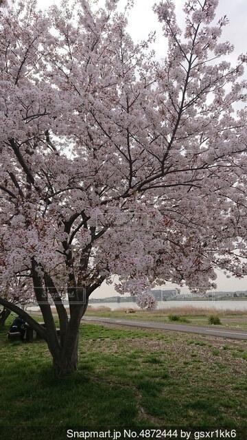 木の枝に花瓶の写真・画像素材[4872444]