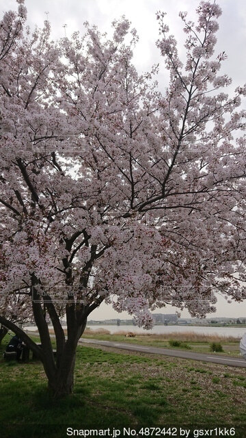 木の隣に座っている木のベンチの写真・画像素材[4872442]