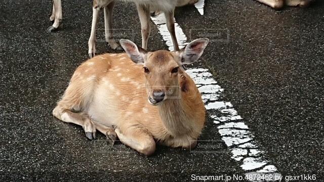 地面に横たわっている犬の写真・画像素材[4872452]