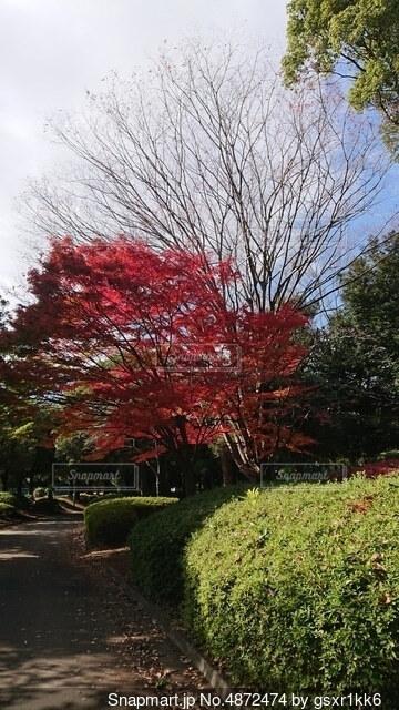 木のクローズアップの写真・画像素材[4872474]