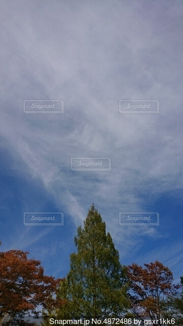 空の雲の群の写真・画像素材[4872486]