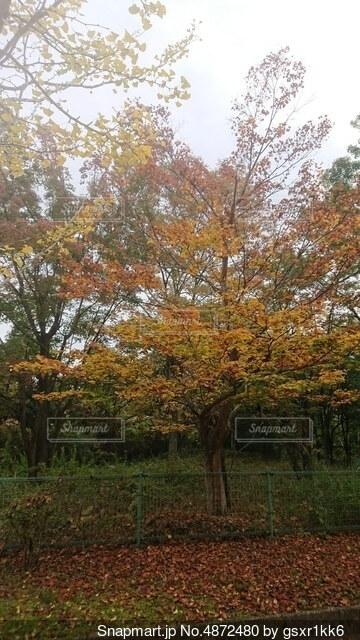 森の中の木の写真・画像素材[4872480]