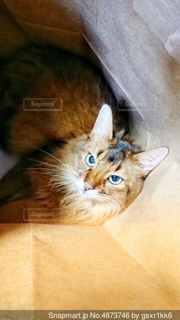 横になってカメラを見ている猫の写真・画像素材[4873746]