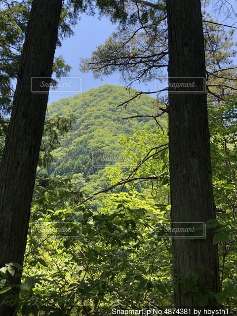 森から見た山ですの写真・画像素材[4874381]