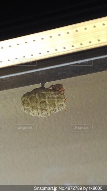 蜂と巣の写真・画像素材[4872789]