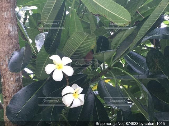 花のクローズアップの写真・画像素材[4874933]