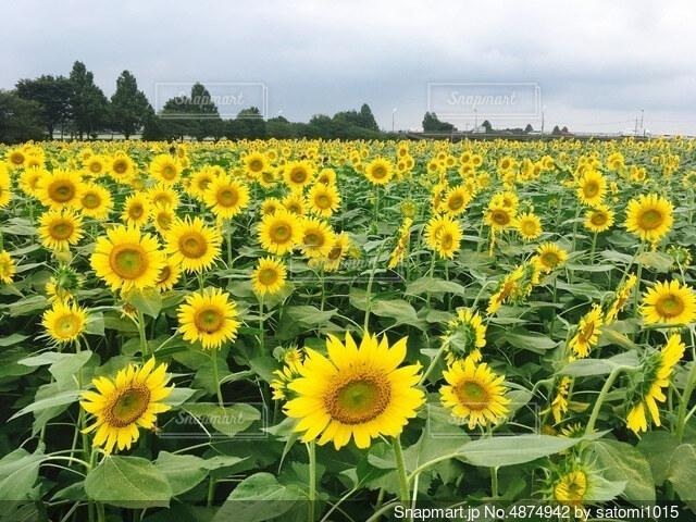 草で覆われた畑の上に座っている花瓶の写真・画像素材[4874942]