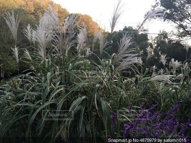 庭の植物の写真・画像素材[4875979]