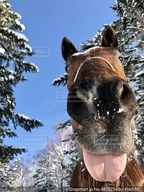 雪で遊ぶ馬の写真・画像素材[4875754]