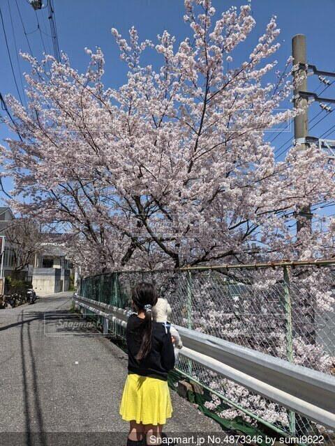 桜道での写真・画像素材[4873346]