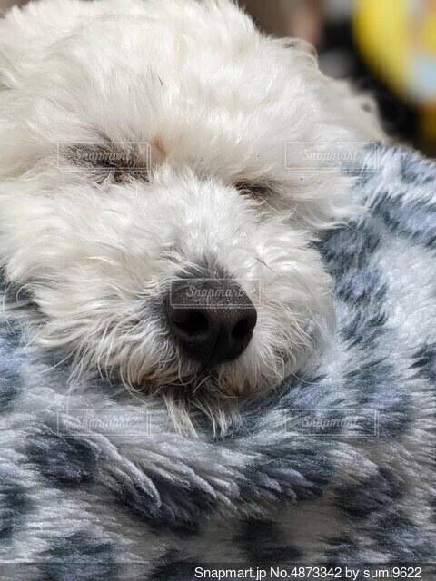 犬のクローズアップの写真・画像素材[4873342]
